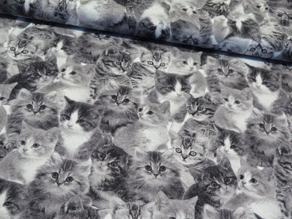 """Canvas """"Katzen"""" grau"""