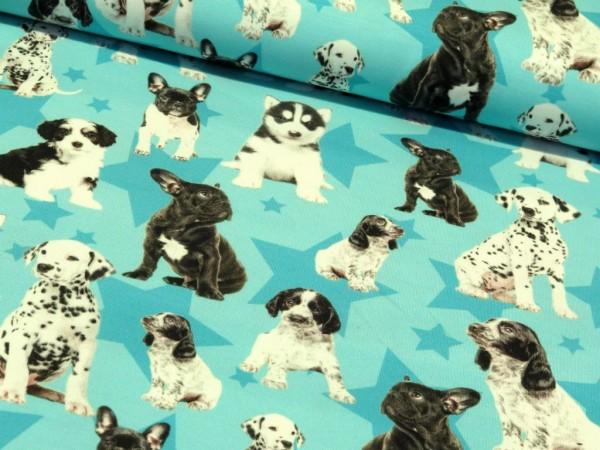 "Baumwolljersey Digital Print ""Dogs"""